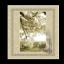 Silk Cotton Icon 64x64 png