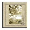 Silk Cotton Icon 96x96 png