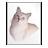 Mimetypes Metafont Icon 48x48 png